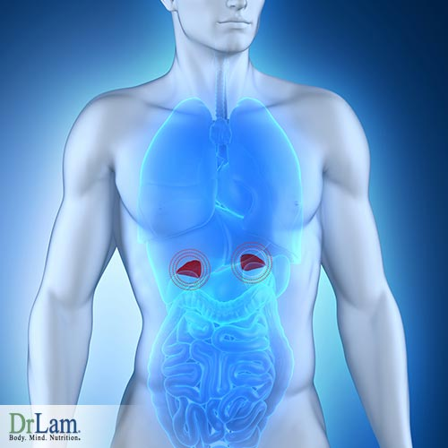 Understanding Adrenal Fatigue