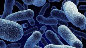 bacteria-macro